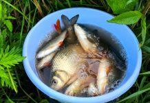 Как развести рыб на даче — советы начинающим
