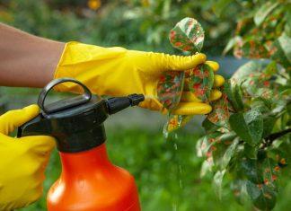 Болезни растений часто досаждают садоводам и огородникам