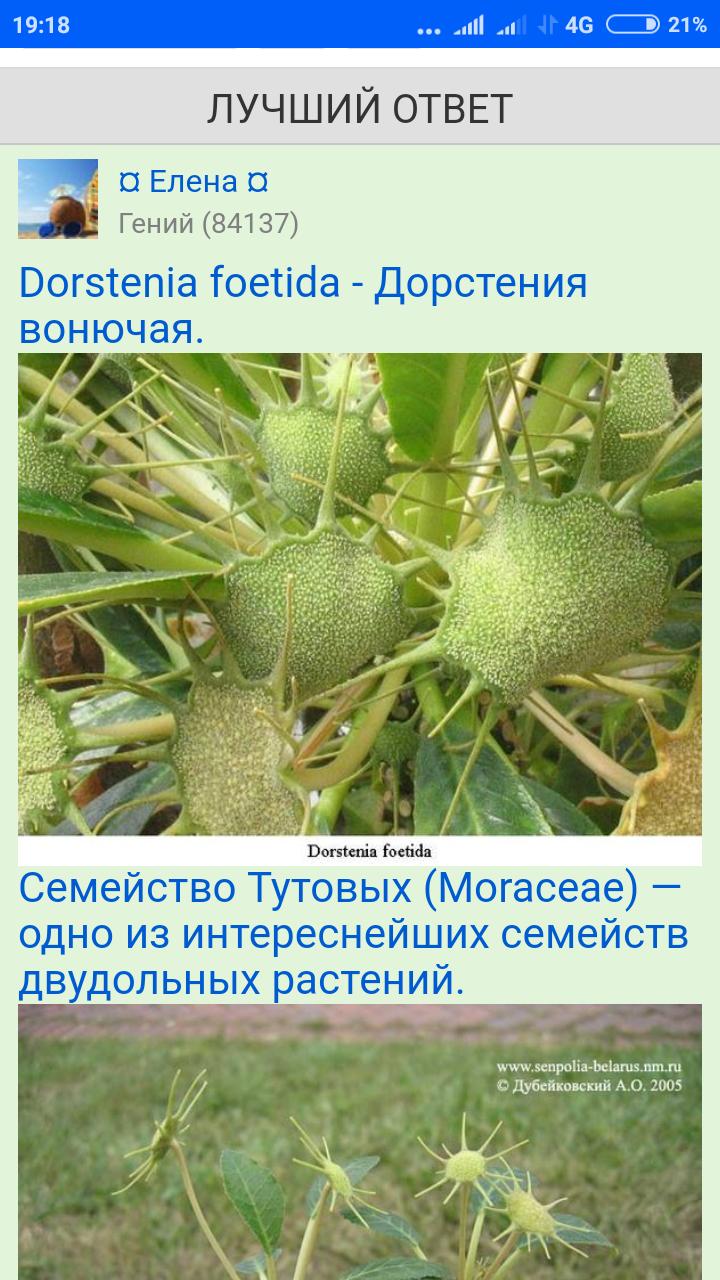 Screenshot_2020-04-05-19-18-32-526_com.android.chrome