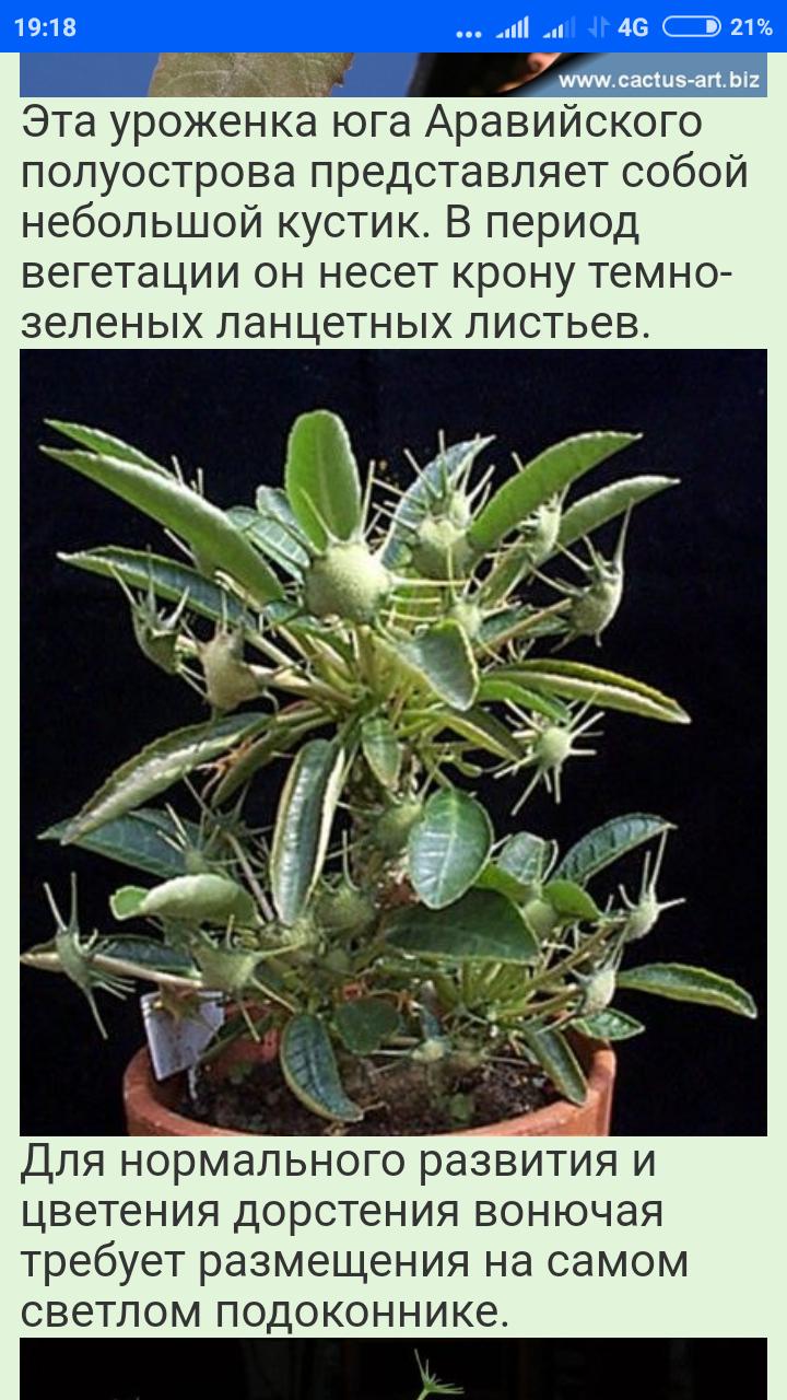 Screenshot_2020-04-05-19-18-59-217_com.android.chrome