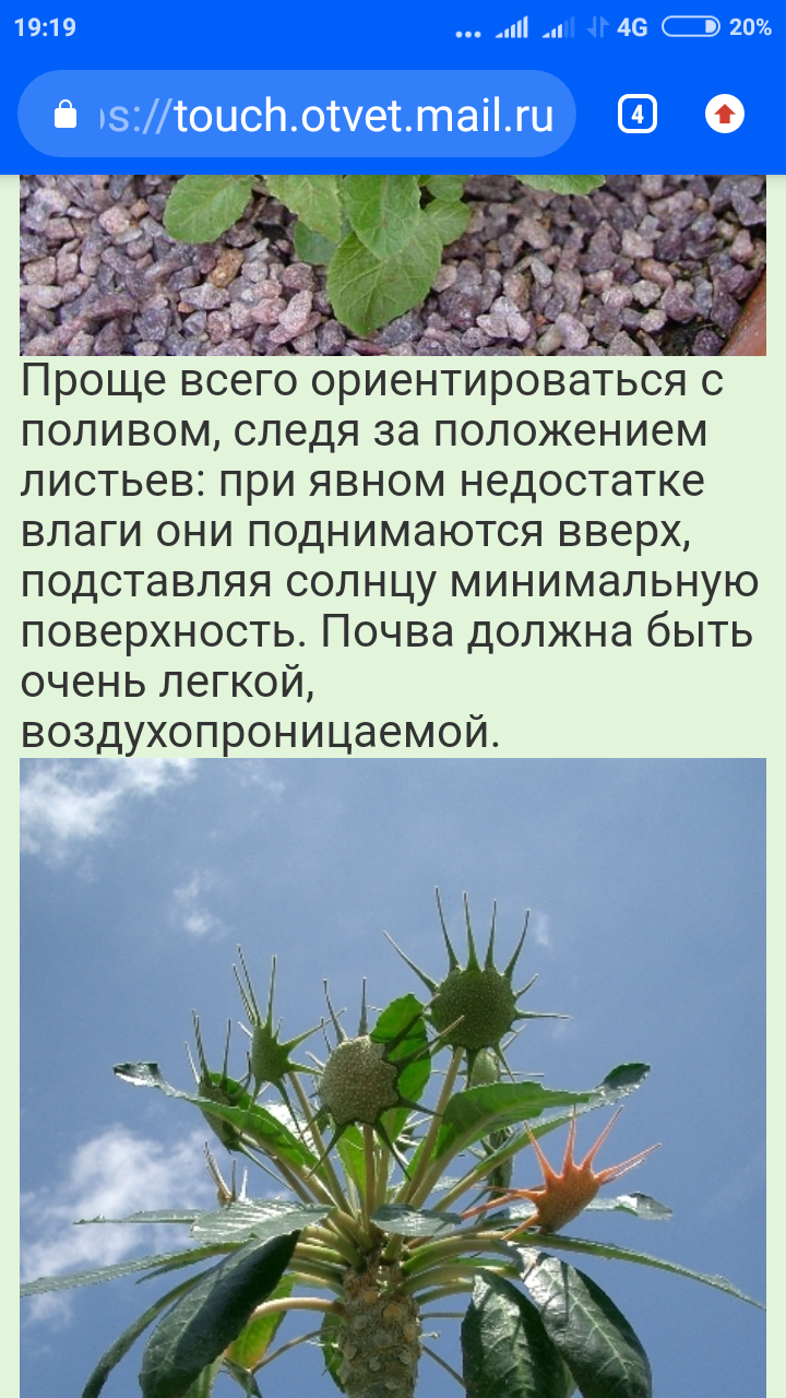 Screenshot_2020-04-05-19-19-16-251_com.android.chrome