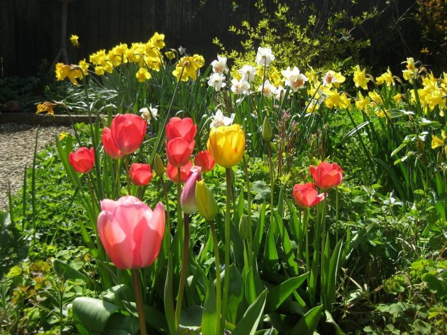 Декоративная часть сада в мае уже радует