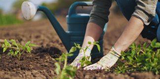 Лунный календарь садовода и огородника на май 2020