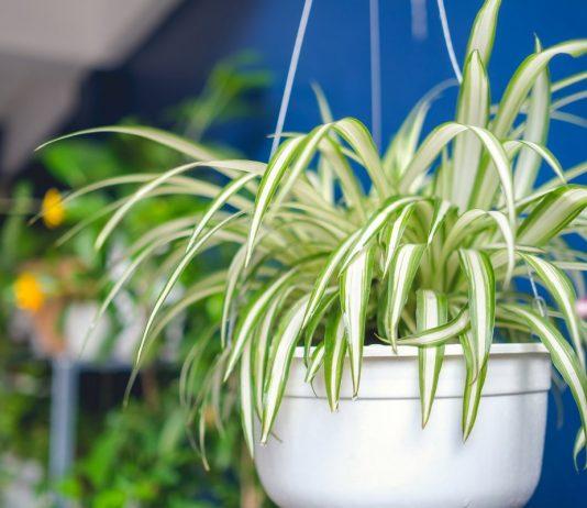 Самые полезные комнатные растения, или Целебный воздух нашего дома