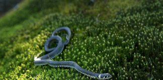 Как защитить участок от змей