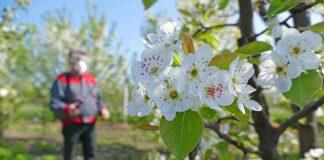 Батрайдер – инсектицид для сада