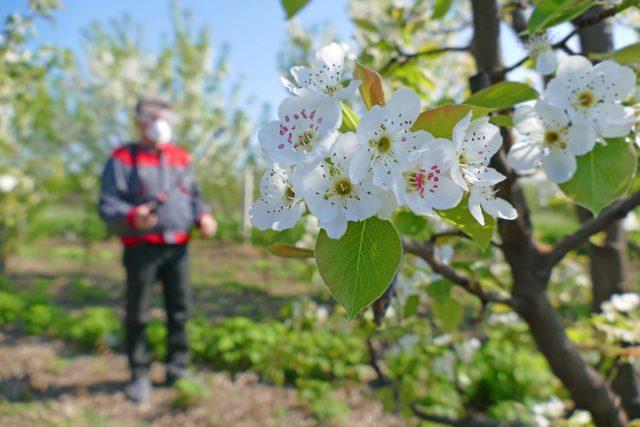 Профилактика вредителей в саду и огороде должна вестись непрерывно