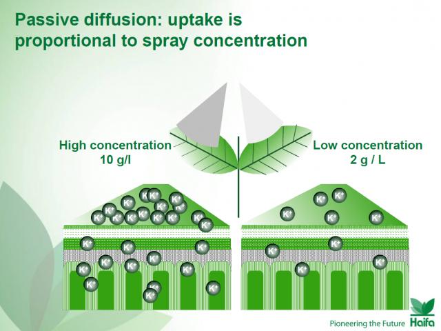 Пассивная диффузия: поглощение пропорционально концентрации распыления. Пример рекомендаций по некорневому питанию от конкурентной компании Хайфа Кемикал (Израиль).