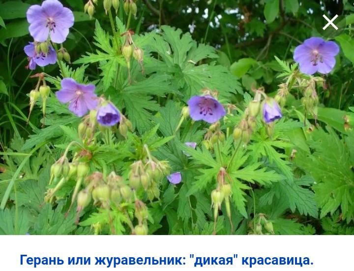 Screenshot_2020-05-03-12-23-50-264_com.android.chrome