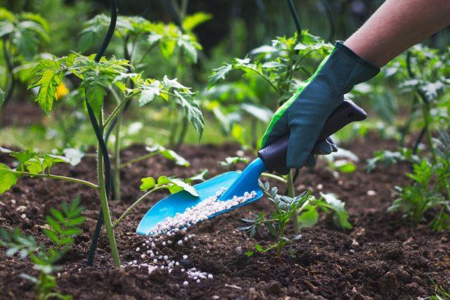 В результате выращивания овощей на субстрате с минеральными подкормками растения становятся в разы уязвимее к вредителям