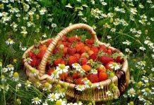 Что не забыть сделать в июне садоводу?