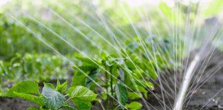 Как напоить растения с минимальными расходами воды и физических сил?