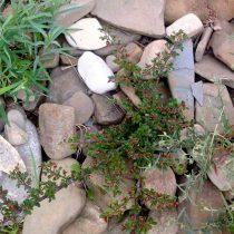 Мульчирование камнями