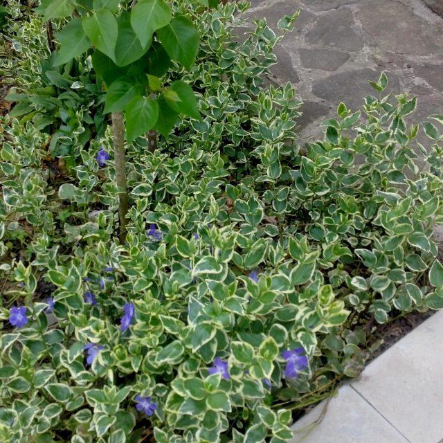 Почвопокровные растения — отличное решение для «безполивного полива»