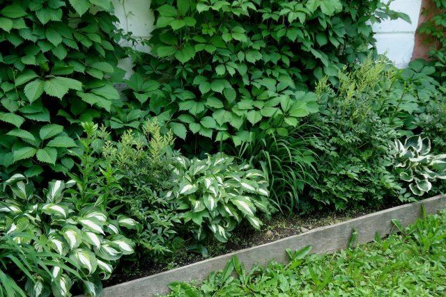 Как я добавила света в тенистые уголки участка с помощью растений