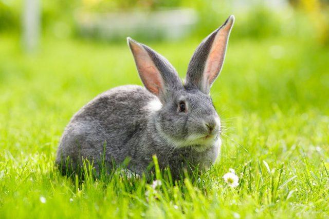 Кролики на лето — мой опыт разведения