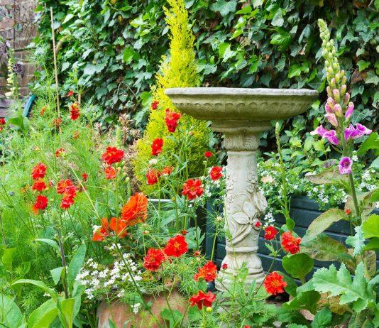 Лучшие растения для цветника на кислой почве