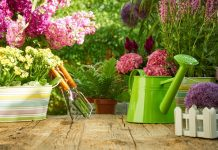 Лунный календарь садовода и огородника на июнь 2020