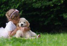 Приятные хлопоты – забота о любимых животных