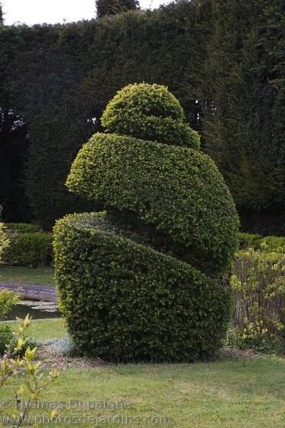 Topiary2