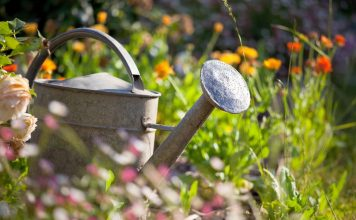 Что не забыть сделать в июле садоводу?