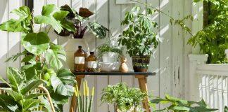 Какие комнатные растения любят пожить летом в саду?
