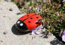 Красочные камни для сада своими руками — творим с удовольствием!