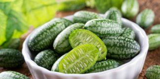 Мелотрия шершавая — чем интересна экзотическая плодовая лиана?