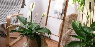 10 лучших комнатных растений для начинающих