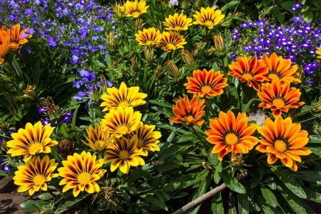 Самый простой способ оживить цветник и добавить ему красок — использовать яркие однолетние растения