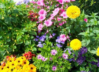 Здоровые, яркие цветы – отрада для ваших глаз