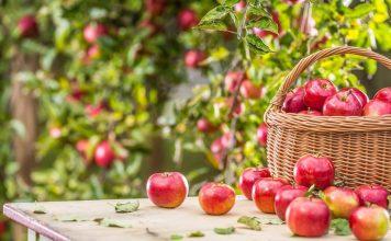 Что не забыть сделать в августе садоводу?