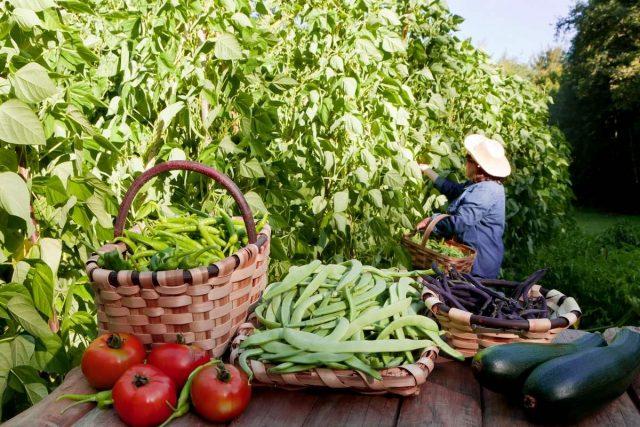 Лунный календарь садовода и огородника на август 2020