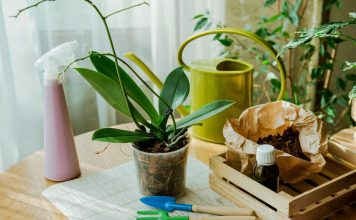Период покоя у фаленопсиса — когда ждать цветения?