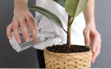 10 растений, которые лучше не полить, чем перелить