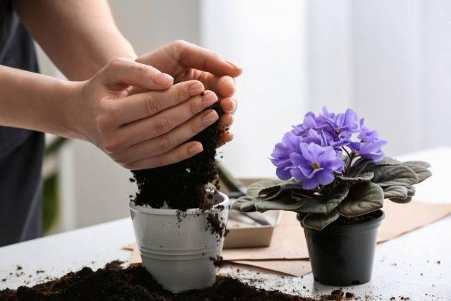 Не стоит пересаживать растение сразу после покупки