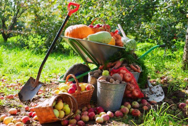 Что не забыть сделать в сентябре садоводу?
