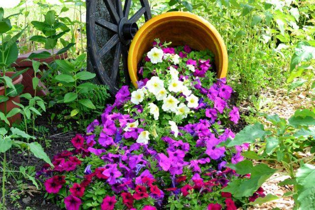Цветочный поток, можно привязывать к имитации воды, но выбор растений только синими и голубыми красками не ограничен