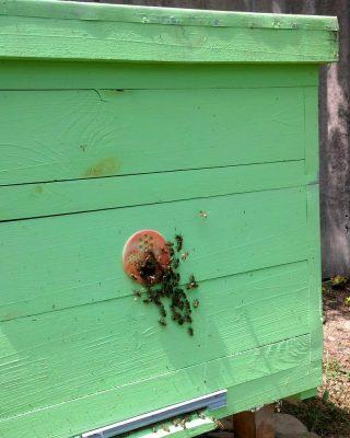 Сильная семья пчёл
