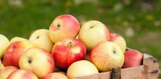 5 секретов длительного хранения яблок