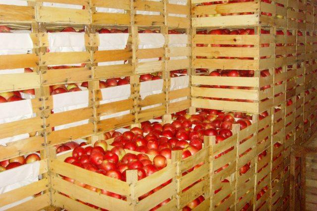 Для хранения яблок предпочтительны емкости из натуральных материалов с вентиляционными отверстиями и зазорами