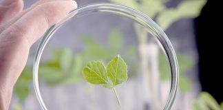 Как повысить устойчивость растений к болезням