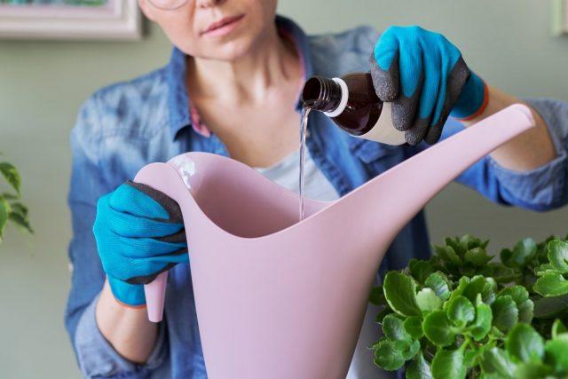 10 правил применения химикатов для комнатных растений
