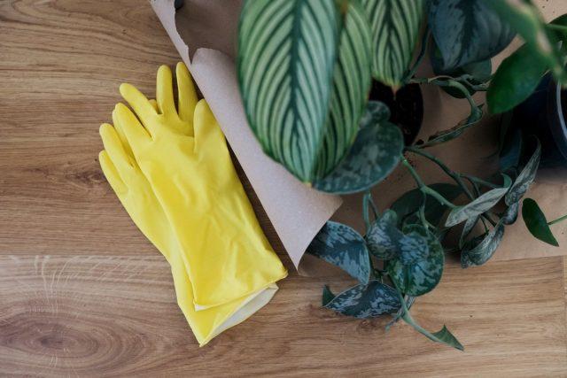 Прежде чем браться за обработку растений, стоит одеть перчатки