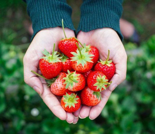 13 главных вопросов и ответов о землянике садовой