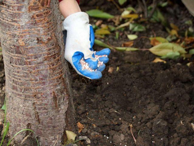 Вносить удобрения осенью можно и в жидкой, и в сухой форме