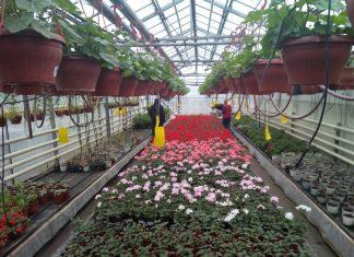 Как ухаживать за комнатными растениями в осенне-зимний период?