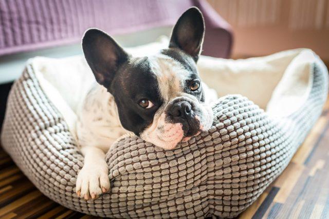 Собаке нужно место для релаксации
