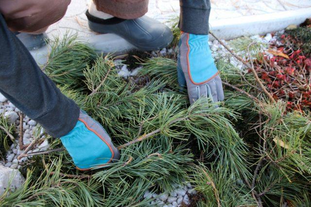 Что не забыть сделать садоводу в ноябре?