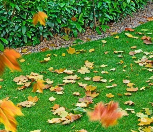 Как ухаживать за газоном осенью?